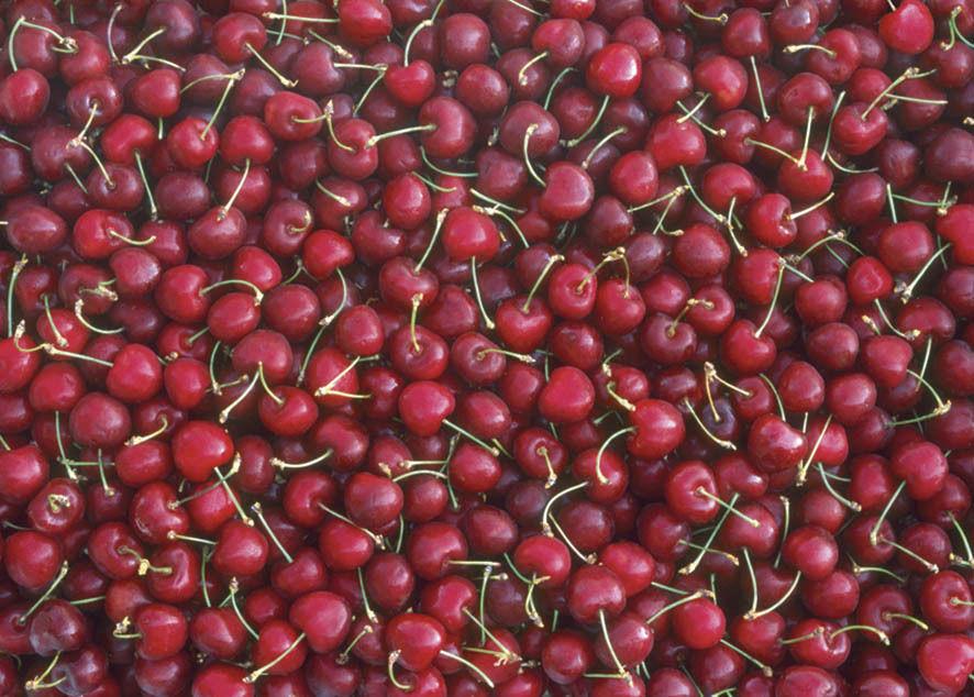 photowrap cherry